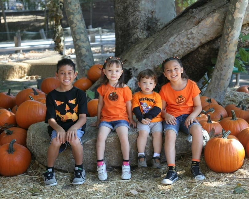 St. Paul Pumpkin Patch Activities