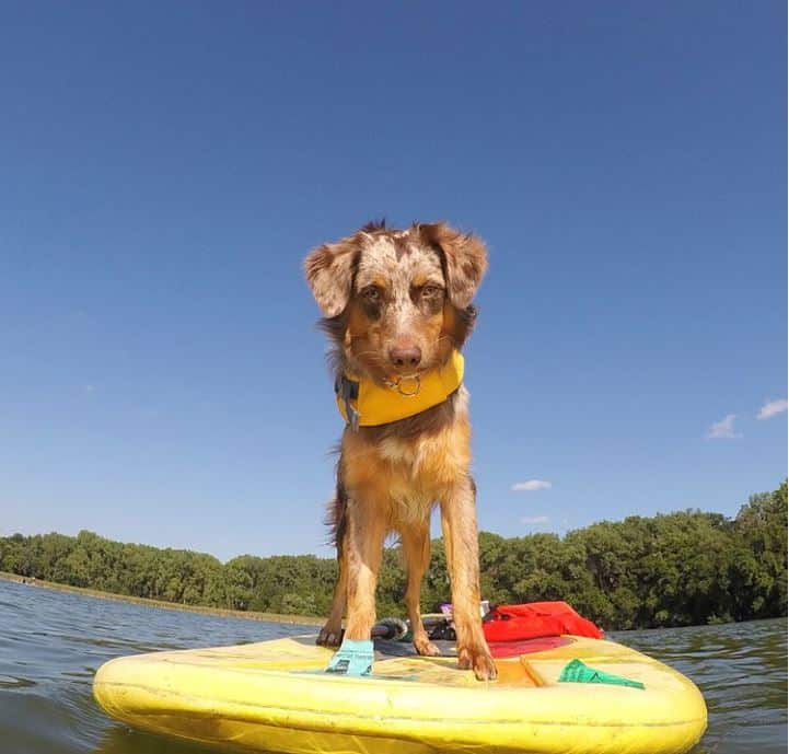 Dog on a paddleboard from Wheel Fun Rentals in Minnesota