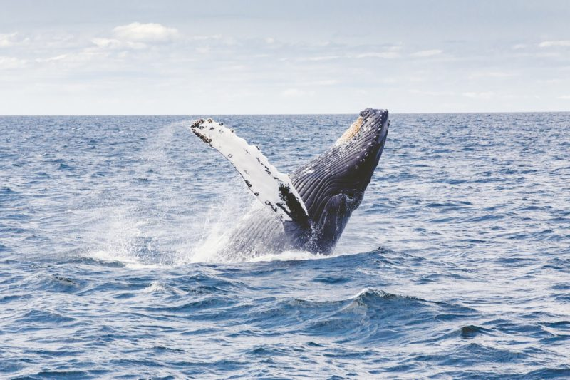 Whale watching in Seaside, OR
